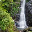 Small Forest Waterfall — Stock Photo