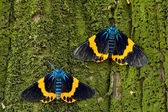 Colorful moth — Stock Photo