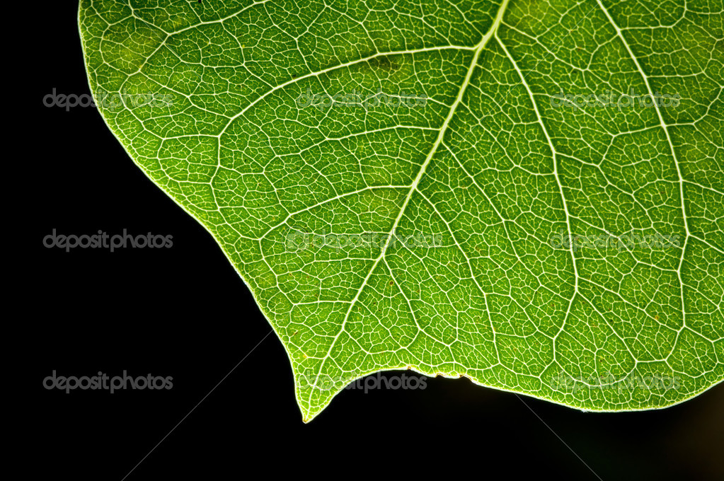 Detail leaf of heart pattern on black background  — Stock Photo #2281492