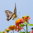 Colorful swallowtail butterfly flying — Stock Photo #2335156