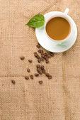 Café frais avec des haricots et feuille verte — Photo