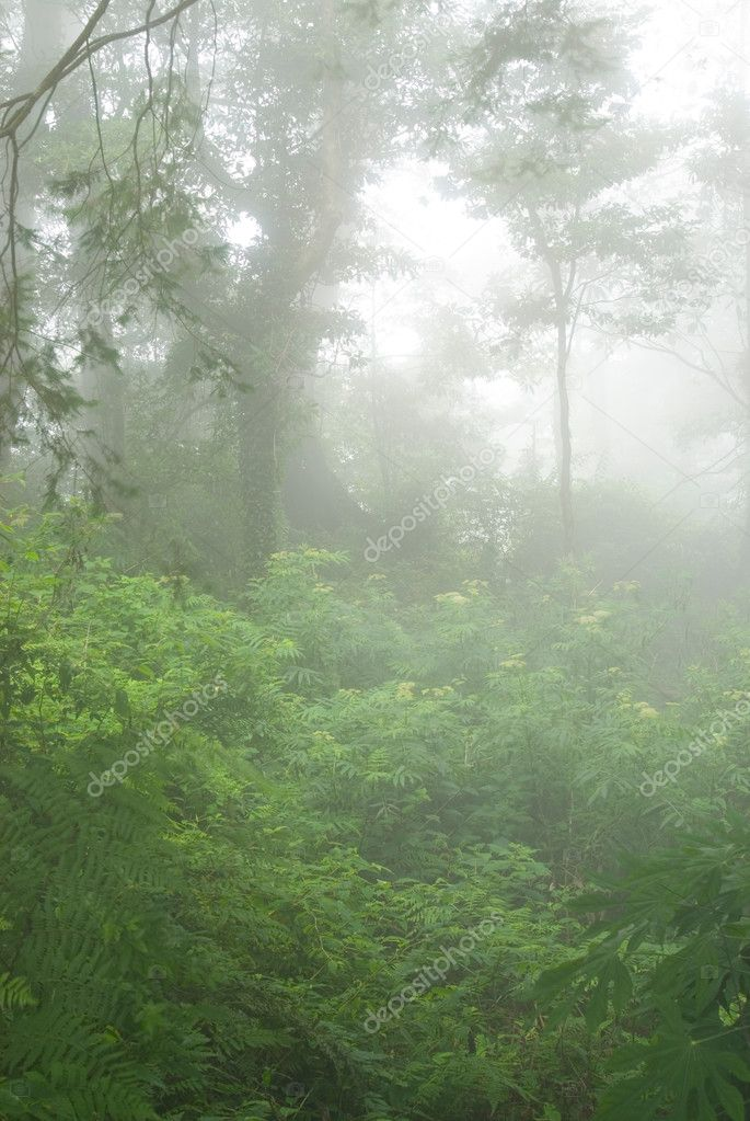 Natural woodland with fog. tropical forest in asia. — Stock Photo #2334901