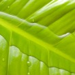 Water surface and green leaf — Stock Photo