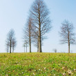Little floewrs and Bald trees on plain - Stock Photo