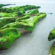 Green Rocky Seashore — Photo