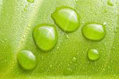 Fresh dews on green leaf — Stock Photo
