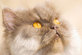 Concentrate cat — Stock Photo