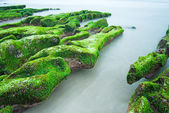 Green Rocky Seashore — Stock Photo