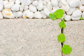 White pebble and creeping oxalis leaf — Stock Photo