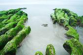 Rocky Seacoast full of green seaweed — Stock Photo