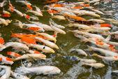 красочные рыбы плавание. — Стоковое фото