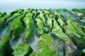 Green Rocky Seacoast — Stock Photo