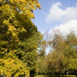 Autumn park — Stock Photo #1832665