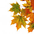 Autumn leafs — Stock Photo #1833610