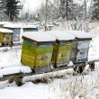 The winter on an apiary - Stock Photo