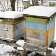 Stock Photo: The winter on an apiary