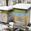 The winter on an apiary — Stock Photo
