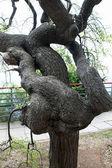 Jest drzewem w parku — Zdjęcie stockowe