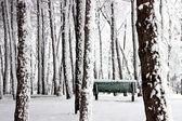 No parque de inverno. — Foto Stock