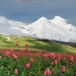 Stock Photo: Mountains of Caucasus