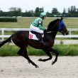 Stock Photo: Horse race,