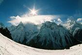 Alpinia. — Photo