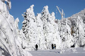 Winter landscape. — Stockfoto