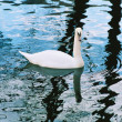 Bird on water. — Stock Photo #2257853