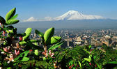 Mountain Ararat. — Foto de Stock