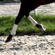 Selective focus on the horseshoes. — Stock Photo