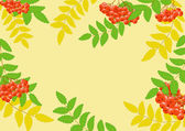 Background with rowan berry — Stock Vector