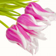 Bouquet of pink tulips — Stock Photo #2537271