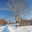 Stock Photo: Winter road with sign and tree