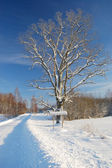 Winter road with sign and tree — Stock Photo