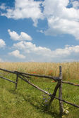 Landscape with fence and wheat — Stock Photo