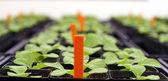 Plants in greenhouse — Stock Photo