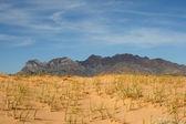 Kelso Sand dunes in Mojave Desert — Stock Photo