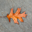 Stock Photo: Oak leaf on asphalt