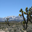 Spring Mountains Nevada — Stock Photo