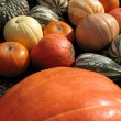 Pumpkins and gourds — Stock Photo #2233733