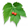 Stock Photo: Two red cherries on green leaf