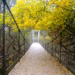 Stock Photo: Bridge in forest