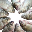 Stock Photo: Group og lake carps