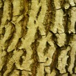 Tree texture - Stock Photo