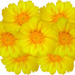 Yellow marigolds — Foto Stock