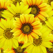 Bouquet of yellow flowers - Stock Photo