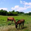 Royalty-Free Stock Photo: Horses on green meadow