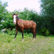 Foto Stock: One horse in nature