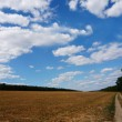 Foto Stock: Summer field over blue sky