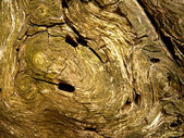 Textura del árbol — Foto de Stock